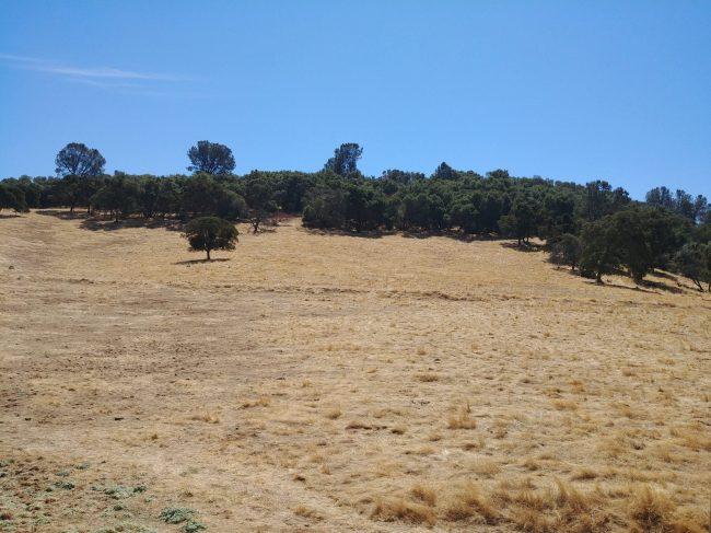 Ione grassland